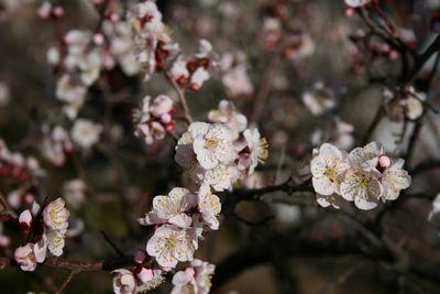梅の名所、不老園-7