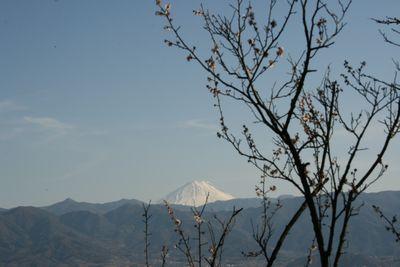 梅の名所、不老園-8
