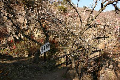 梅の名所、不老園-10
