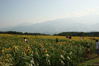 himawari-2.jpg